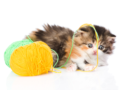 lop eared: Cute kitten playing with clews of thread. isolated on white background Stock Photo