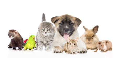 studio zoo: large group of pets together in front. Isolated on white background