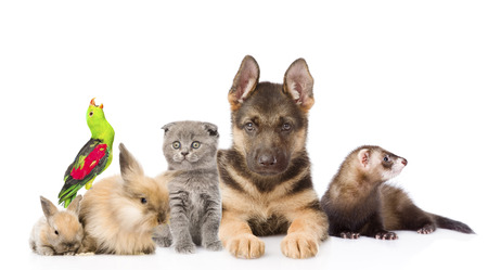studio zoo: Group of pets. Isolated on white background