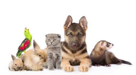loro: Grupo de animales domésticos. Aislado en el fondo blanco Foto de archivo