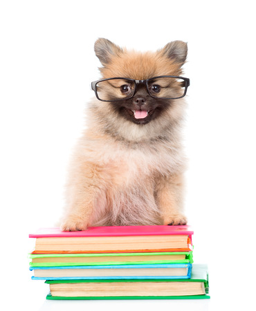 paw smart: tiny spitz  puppy with glasses standing on a books. isolated on white background