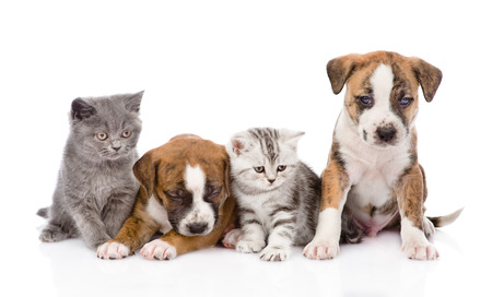 Group of cats and dogs sitting in front. isolated on white background Stock Photo