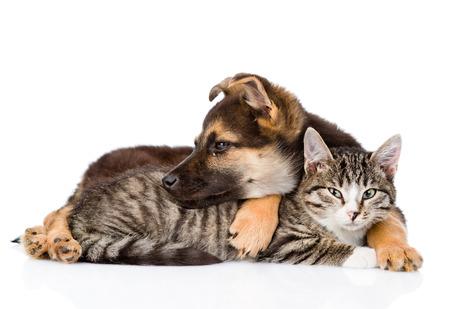gato atigrado: perro del h�brido abrazando gato atigrado.