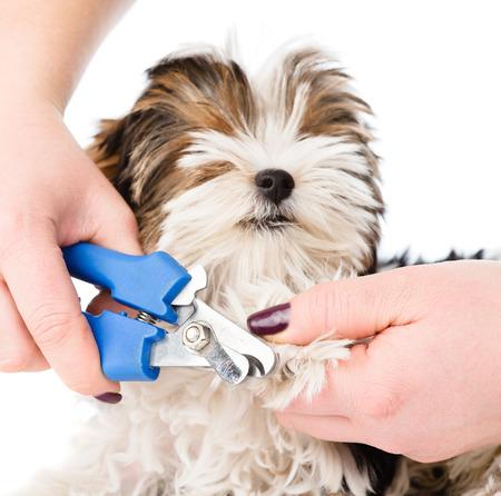 dierenarts snijden hond teennagels. geïsoleerd op witte achtergrond Stockfoto