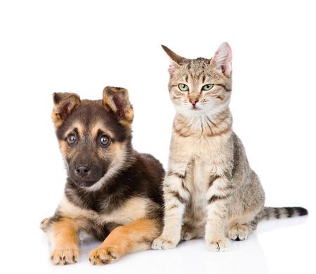 white paw: cat and dog sitting together. isolated on white background Stock Photo