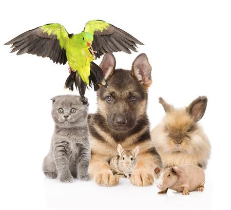 large group of animals: large group of domestic animals.  Isolated on white background