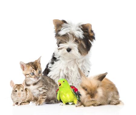 puppy love: grupo de animales dom�sticos y aves. Aislado en el fondo blanco