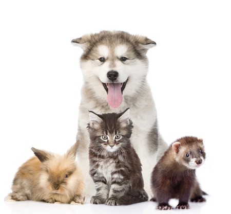 funny cats: Large group of pets. Isolated on white background Stock Photo