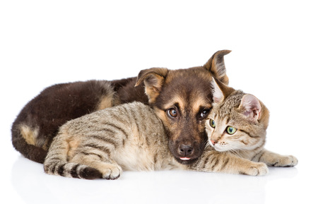 sad dog lying with cat. isolated on white background