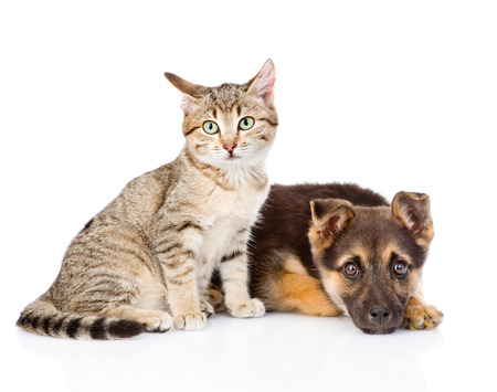 near side: tabby cat sitting next to a sad dog. isolated on white background Stock Photo