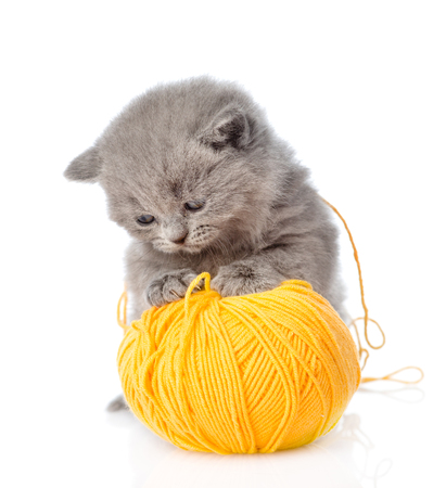 cute pussy: cat playing with a ball of wool. isolated on white background