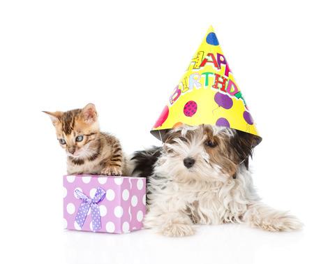 puppy love: gato de bengala y cachorro terrier de Biewer Yorkshire con sombrero de cumpleaños y caja de regalo. aislado en fondo blanco