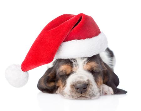 Sleeping basset hound puppy in red santa hat. isolated on white background photo