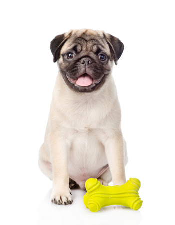 carlin: Pug puppy with toy. isolated on white background Stock Photo