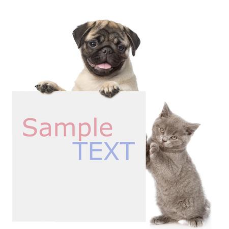 chien: Chat et chien furtivement par derri�re plateau vide et en regardant la cam�ra. isol� sur fond blanc Banque d'images