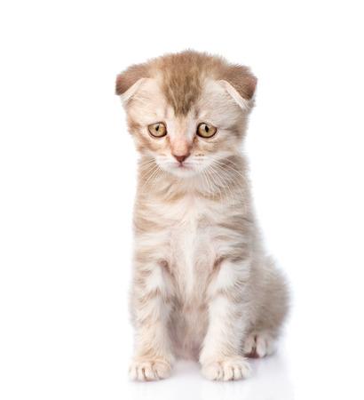 Sad-flap oren kitten. geïsoleerd op witte achtergrond