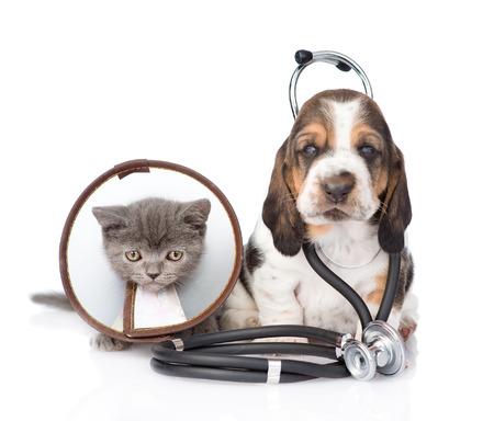collarin: Basset hound cachorro con el estetoscopio en el cuello y el gatito que lleva un collar de embudo. aislado en fondo blanco