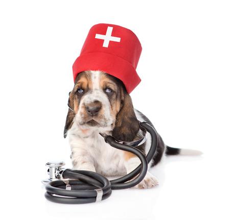 Basset hound puppy wearing nurses medical hat and stethoscope on his neck. isolated on white background photo