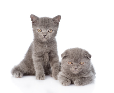 Portrait two cute kittens. isolated on white background photo
