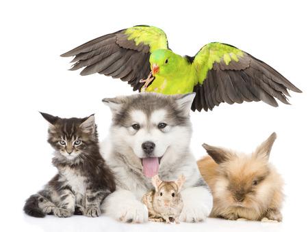 loro: grupo de animales de compañía se extiende delante. Aislado en el fondo blanco Foto de archivo