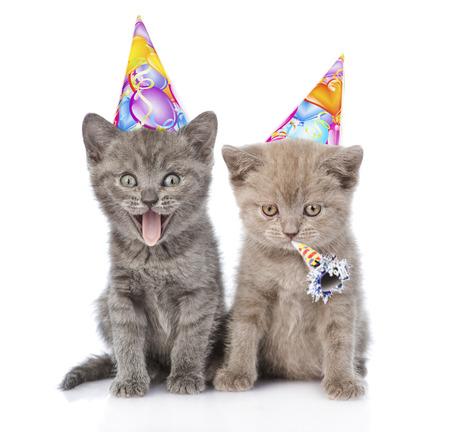 誕生日の帽子で 2 つの面白い子猫。白い背景に分離