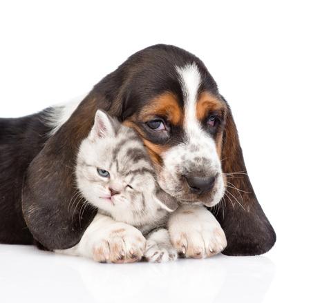 basset hound puppy embracing tiny kitten. isolated on white background