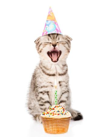 koty: śmiejąc kot kot z urodzin kapelusz i ciasto. na białym tle