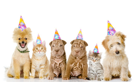 fiesta familiar: Grupo de gatos y perros con sombreros de cumpleaños. aislado en fondo blanco Foto de archivo