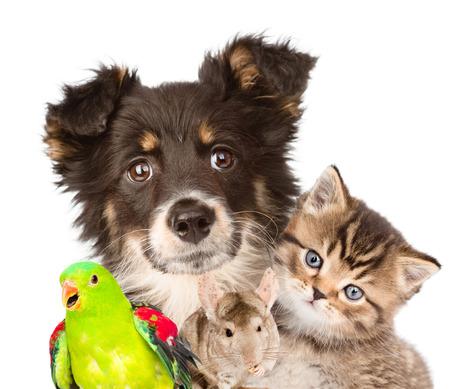 Groupe d'animaux agrandi. isolé sur fond blanc Banque d'images - 39047883