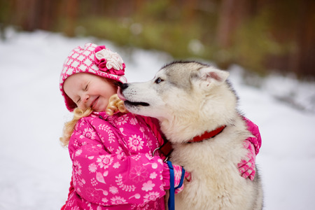 hasky dog licking little girl