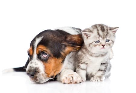 animal sad face: basset hound puppy lying with tiny kitten. isolated on white background