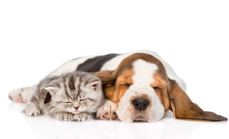 Kitten and puppy sleeping together. isolated on white background Stockfoto