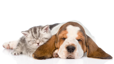 Kitten and puppy sleeping together. isolated on white background Stock Photo