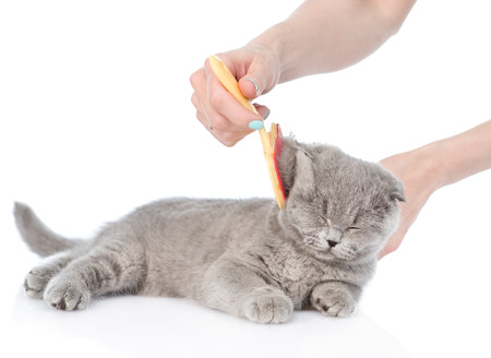 cat grooming: care for cat hair. isolated on white background Stock Photo