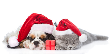 pet new years new year pup: Cocker Spaniel puppy and tiny kitten with gift box sleeping in red santa hat. isolated on white background