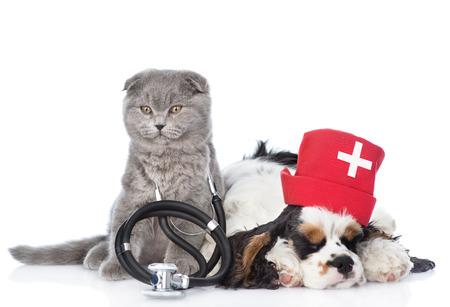 彼の首と看護師医療の帽子をかぶっているコッカー ・ スパニエル子犬に聴診器で子猫。白い背景に分離