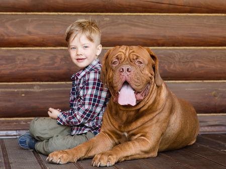 bordeaux dog: Little boy with big Bordeaux dog