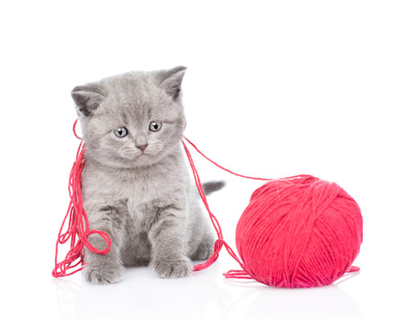 clew: cat playing with a ball of wool. isolated on white background