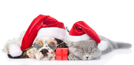 PUPPIES: Cocker Spaniel puppy and tiny kitten with gift box sleeping in red santa hats. isolated on white background. Stock Photo