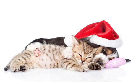pet new years new year pup: Tiny kitten and basset hound puppy in red santa hat sleeping on a pillow. isolated on white background Stock Photo