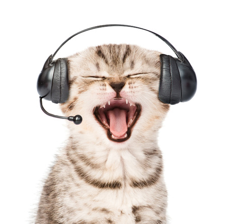 pet services: mewing kitten with phone headset. isolated on white background.