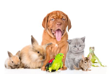 pets: Group of pets together in front view. isolated on white background.