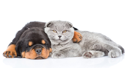 purebred dog: Rottweiler puppy embracing cute kitten. Isolated on white background. Stock Photo