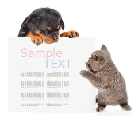 Playful cat and rottweiler puppy peeking from behind empty board. isolated on white background.