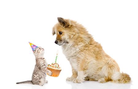 cat food: cat and dog celebrate birthday. isolated on white background.