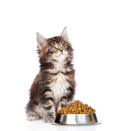 aliments droles: maine coon chaton assis avec un bol de nourriture s�che pour chats et levant les yeux. isol� sur fond blanc.