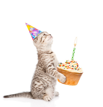 happy birthday baby: tabby cat in birthday hat holding cake with candles. isolated on white background.
