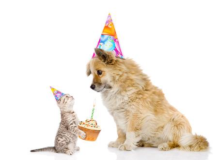 gatto si congratula con cane per il suo compleanno. isolato su sfondo bianco.