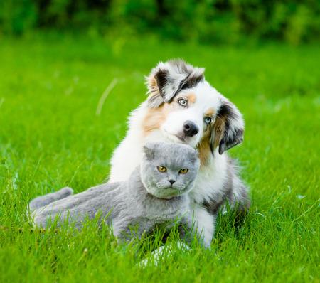 puppy love: Perrito australiano del pastor que miente con un gato en el verde césped. Foto de archivo