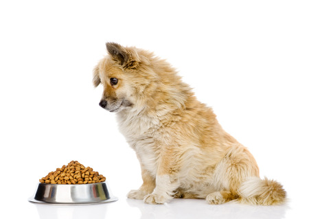 puppy dog sitting with a bowl of dry dog food. isolated on white background. Stockfoto